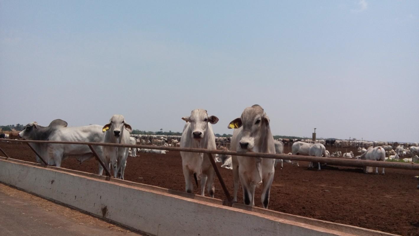Cepea: Exportação absorve oferta doméstica e sustenta indicador